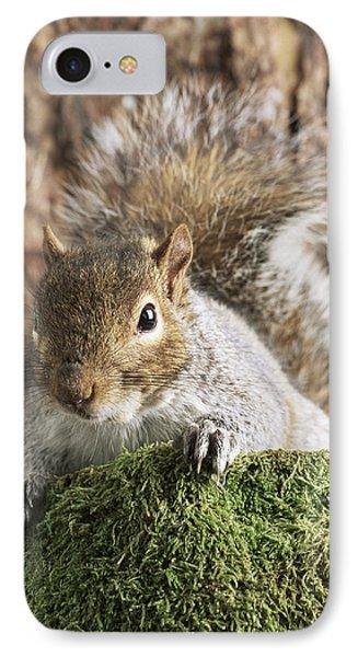 Grey Squirrel Phone Case by David Aubrey