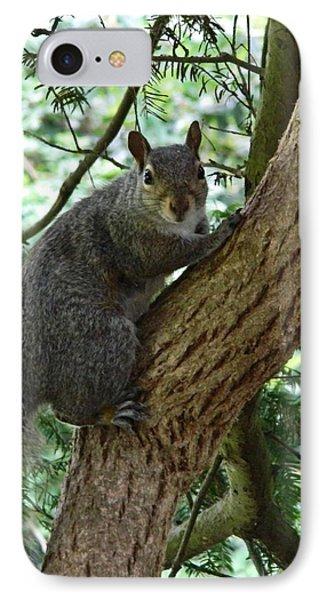 Grey Squirrel IPhone Case by Sharon Lisa Clarke