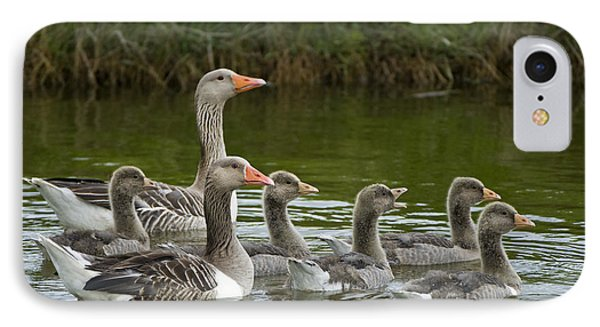 Greylag Goose Anser Anser Couple Phone Case by Willi Rolfes
