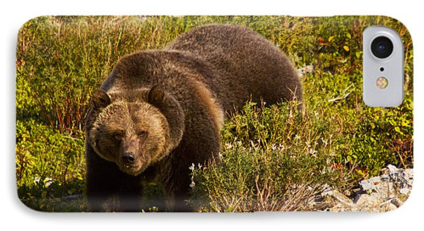 Grizzly 1 IPhone Case by Mark Kiver