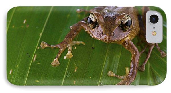 Ground Frog Nakanai Mts Papua New Guinea Phone Case by Piotr Naskrecki