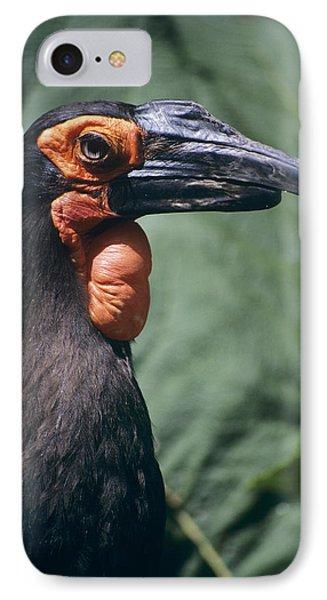 Ground Hornbill Head IPhone Case by David Aubrey