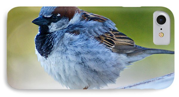 Guard Bird IPhone Case by Colleen Coccia