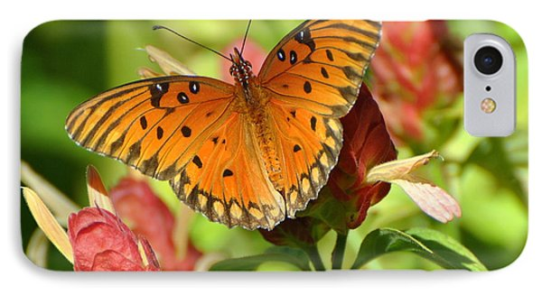 Gulf Fritillary Butterfly On Flower IPhone Case by Jodi Terracina