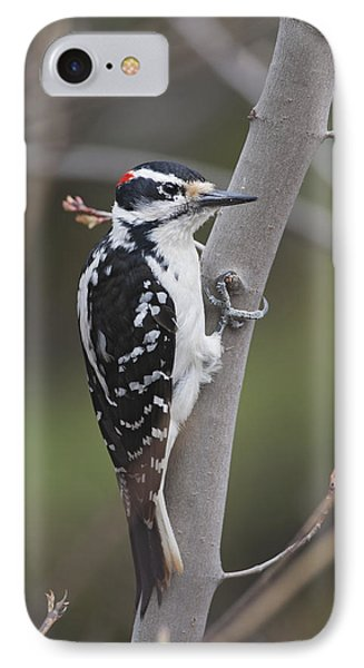 Hairy Woodpecker Picoides Villosus IPhone Case by Amy Kay