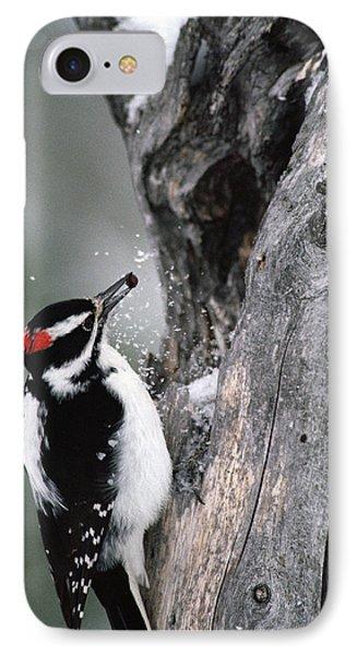 Hairy Woodpecker Picoides Villosus IPhone Case by Michael Quinton