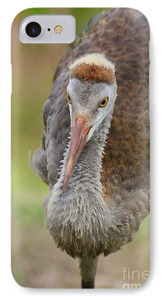 Handsome Sandhill Crane IPhone Case by Carol Groenen
