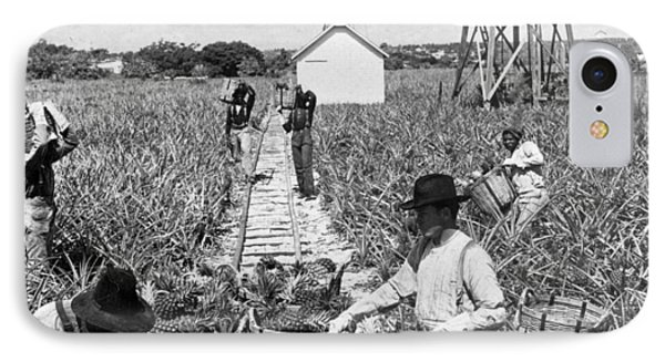 Harvesting Indian River Pineapples - C 1906 - Florida Phone Case by International  Images