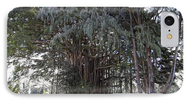 Hawaiian Banyan Tree Phone Case by Daniel Hagerman