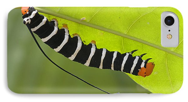 Hawk Moth Caterpillar Guyana Phone Case by Piotr Naskrecki
