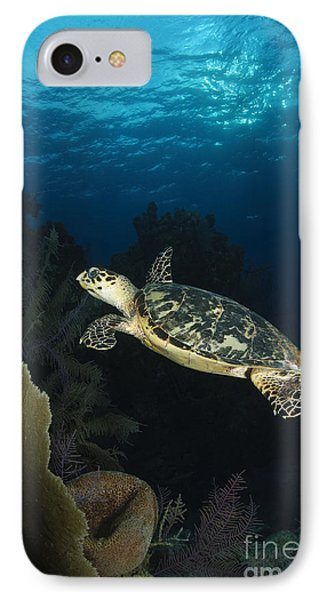 Hawksbill Sea Turtle Swimming Phone Case by Todd Winner