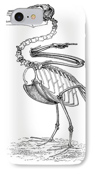 Hesperornis Phone Case by Science Source