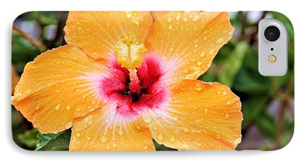 Hibiscus Beauty IPhone Case by Elizabeth Budd