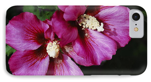 Hibiscus Flowers IPhone Case by Janice Adomeit