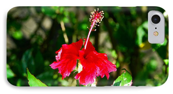 IPhone Case featuring the photograph Hibiscus by Pravine Chester