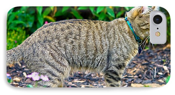 Highland Lynx Cat In Garden Phone Case by Susan Leggett