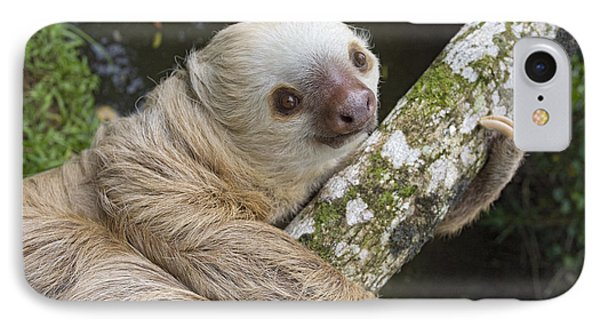 Hoffmanns Two-toed Sloth Costa Rica Phone Case by Suzi Eszterhas