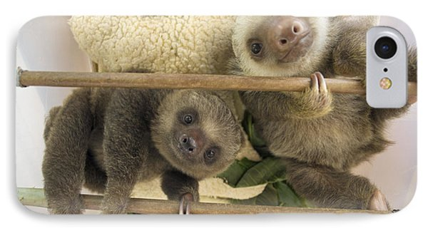 Hoffmanns Two-toed Sloth Orphaned Babies Phone Case by Suzi Eszterhas
