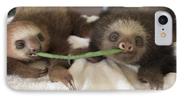 Hoffmanns Two-toed Sloth Orphans Eating Phone Case by Suzi Eszterhas