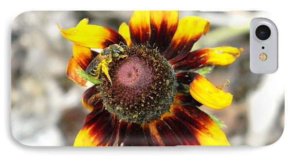 IPhone Case featuring the photograph Honey Bee On Yellow Daisy by Jodi Terracina