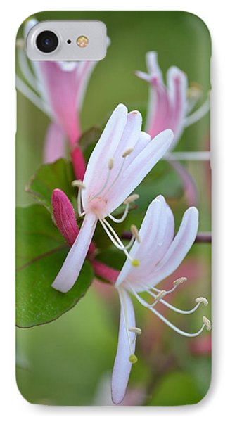 IPhone Case featuring the photograph Honeysuckle by JD Grimes