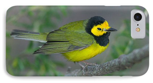 Hooded Warbler Phone Case by Clarence Holmes