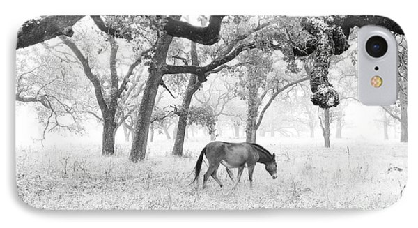 Horse In Foggy Field Of Oaks IPhone Case by CML Brown