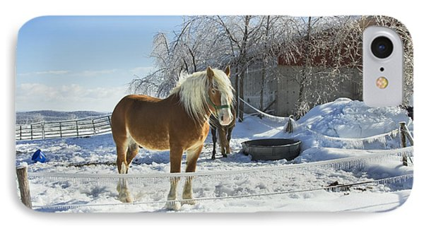 Horse On Maine Farm After Snow And Ice Storm Photograph IPhone Case by Keith Webber Jr