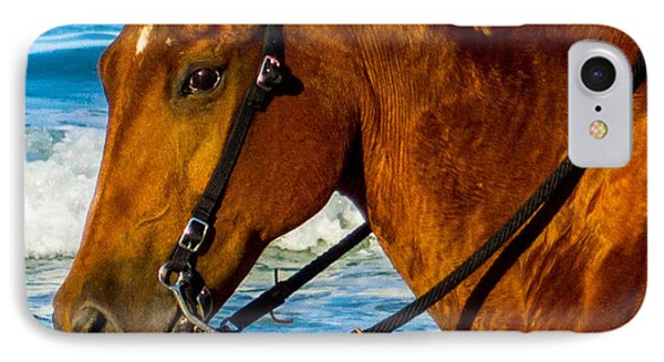 Horse Portrait  Phone Case by Shannon Harrington
