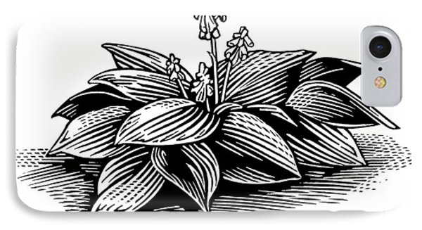 Hosta, Lino Print Phone Case by Gary Hincks