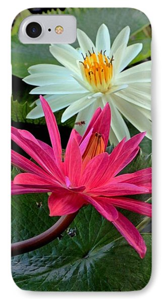 Hot Pink And White Water Lillies IPhone Case by Larry Nieland