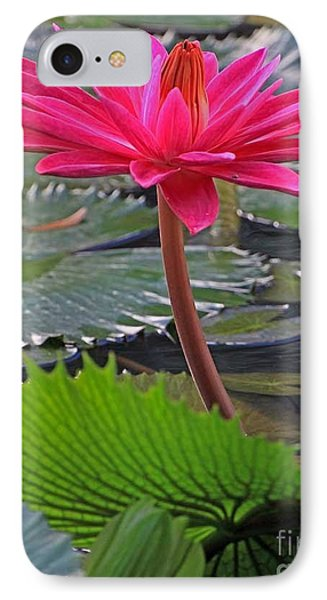 Hot Pink Waterlily IPhone Case by Larry Nieland