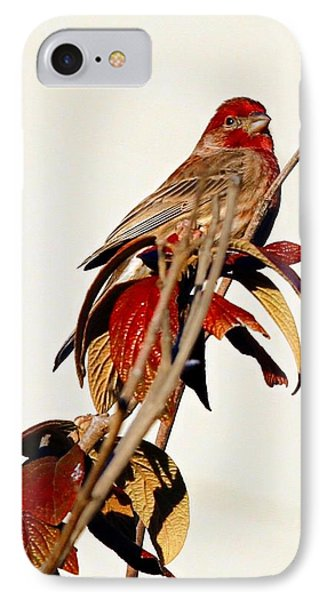 IPhone Case featuring the photograph House Finch Perch by Elizabeth Winter