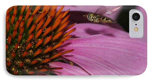 Hoverfly Hovering Over Cornflower IPhone Case