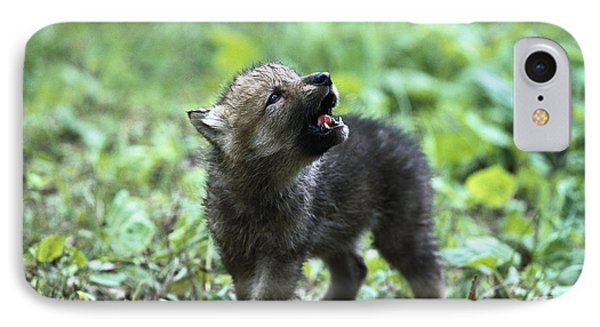 Howling Wolf Pup IPhone Case by Konrad Wothe