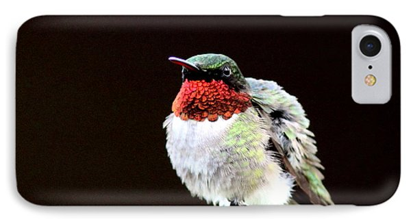 Hummingbird - Ruffled Feathers IPhone Case