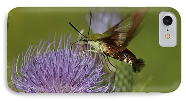 Hummingbird Or Clearwing Moth Din178 IPhone Case by Gerry Gantt