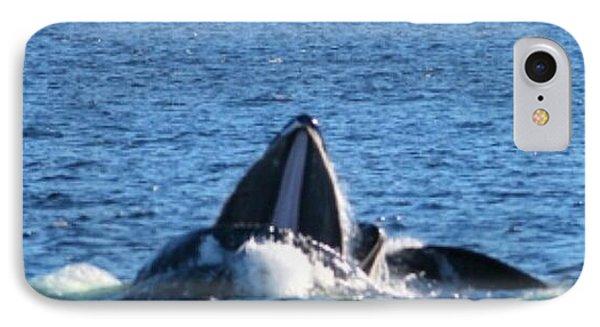 Humpback Whale Phone Case by Pamela Walrath