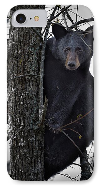 Hunting Berries IPhone Case by Ronald Lutz