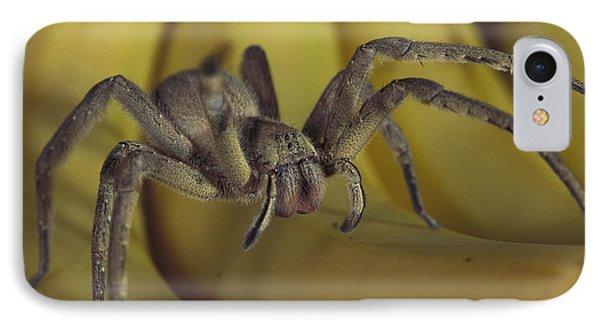 Hunting Spider Cupiennius Salei Walking Phone Case by Heidi & Hans-Juergen Koch