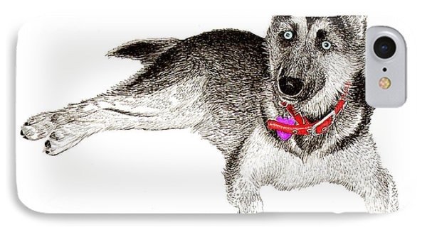 Husky With Blue Eyes And Red Collar IPhone Case by Jack Pumphrey