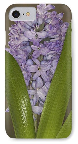 Hyacinth In Full Bloom IPhone Case