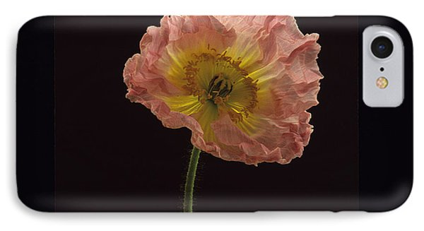 Iceland Poppy 3 IPhone Case by Susan Rovira
