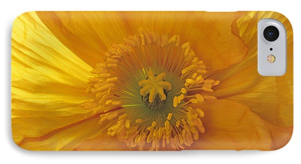 IPhone Case featuring the photograph Iceland Poppy 4 by Susan Rovira