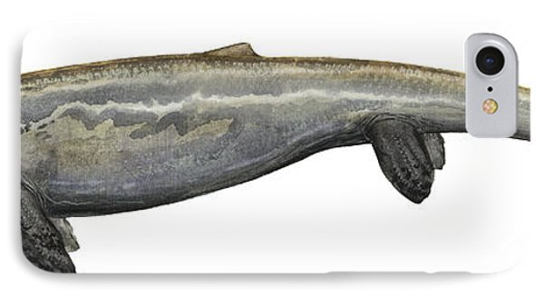 Illustration Of A Plotosaurus Phone Case by Sergey Krasovskiy