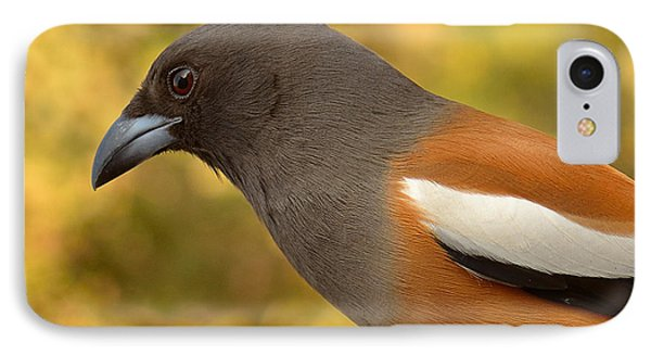 Indian Treepie. A Portrait. IPhone Case by Fotosas Photography