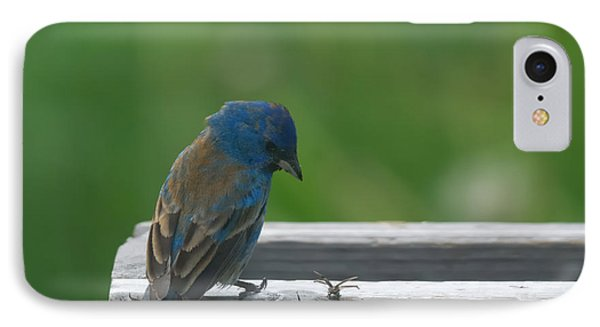 Bunting iPhone 7 Case - Indigo Bunting And Friend by Susan Capuano
