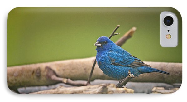Bunting iPhone 7 Case - Indigo Bunting by Susan Capuano