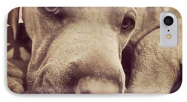 #instadog #dogs #instamood #instagood IPhone Case by Sophie Tico