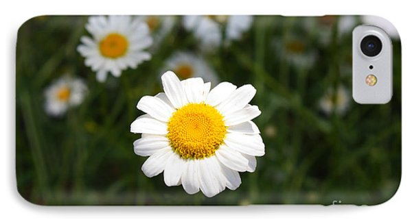 IPhone Case featuring the photograph Isn't That A Daisy by Tony Cooper
